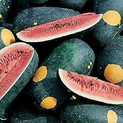 Moon & Stars Watermelon Seeds (Red Flesh) (40 Seed Pack) : Garden & Outdoor