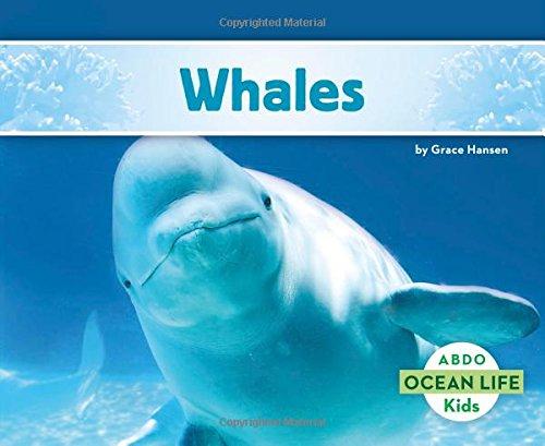 Whales (Ocean Life)