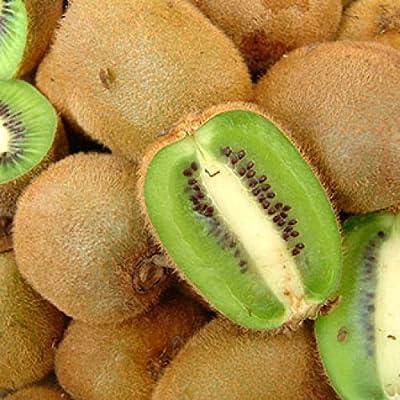 "Actinidia deliciosa, Kiwi Fruit Tree""Tomuri"" Male Vine (2 Starter Plants) : Garden & Outdoor"