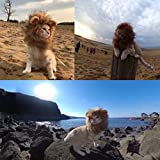 CPPSLEE Lion Mane Wig Costume for Cat (Gray)