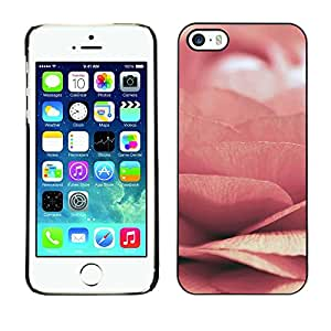 Plastic Shell Protective Case Cover || Apple iPhone 5 / 5S || Pink Spring Flower Love Petal @XPTECH