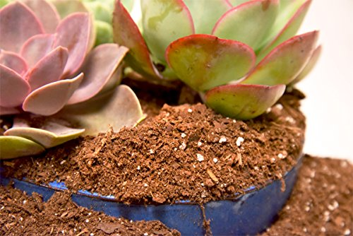 Review Succulent Soil Mix by