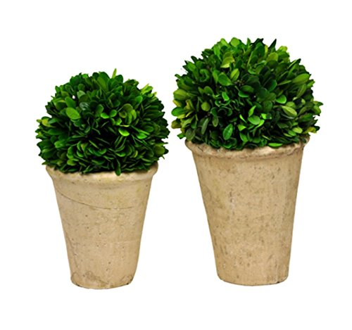 Evergreen Topiary (Galt International Naturally Preserved Real Boxwood Ball Topiary Plants with Restoration Style Pots, Set of 2)