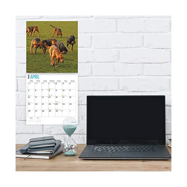 2020 Bloodhounds Wall Calendar by Bright Day, 16 Month 12 x 12 Inch, Cute Dogs Puppy Animals Hunting 3