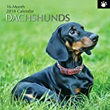 2018 Dachshunds Calendar - 12 x 12 Wall Calendar - With 210 Calendar Stickers