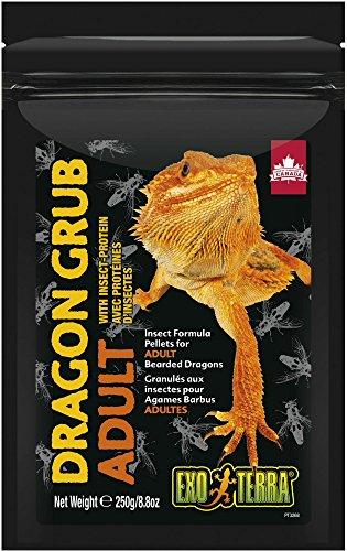 - Exo Terra Dragon Grub Adult 8.8oz