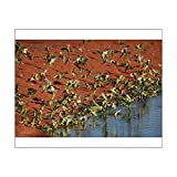 home drinking water treatment plant 10x8 Print of Budgerigars - Drinking - Papunya Aboriginal Community (14707962)
