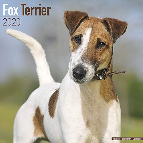 Fox Terrier Calendar - Dog Breed Calendars - 2019 - 2020 Wall Calendars - 16 Month by Avonside (Multilingual -