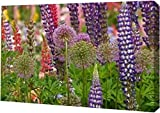 """Oregon,Salem Flowers at Schreiners Iris Garden by Don Paulson - 13"""" x 20"""" Gallery Wrapped Giclee Canvas Art Print - Ready to Hang offers"""