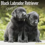 Black Labrador Puppies Calendar - Dog Breed Calendars - 2017 - 2018 wall Calendars - 16 Month by Avonside