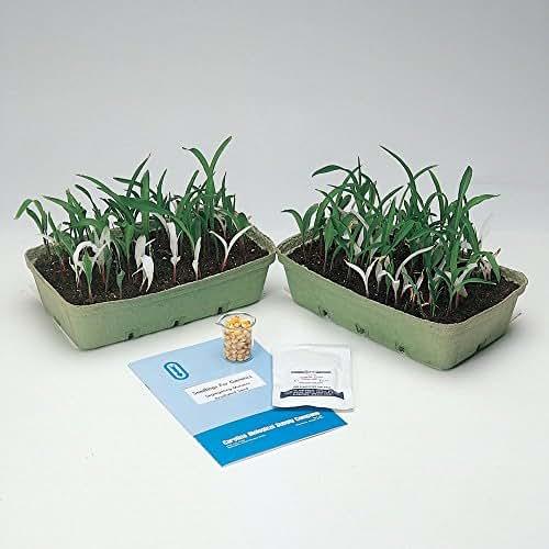 Genetic Corn Seed, Green:Albino