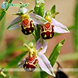 100 Seeds China Rare Flower Bee Orchid Flower Seed Smile Face Interesting Flowers Seed