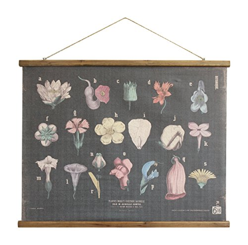 Creative Co-Op Scientific Botanicals Linen & Wood Scroll Wall - Botanical Wood
