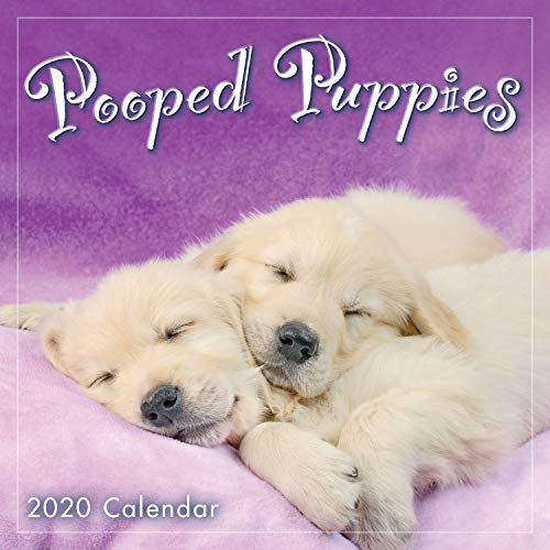 Pooped Puppies 2020 Mini Wall Calendar