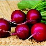Organic Champion Radish 200 Seeds #8116 Item Upc#650348691646