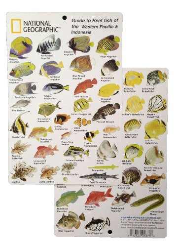 - National Geographic - Guide to Reef fish of the Western Pacific & Indonesia - Fish ID Card (6 in by 9 in)