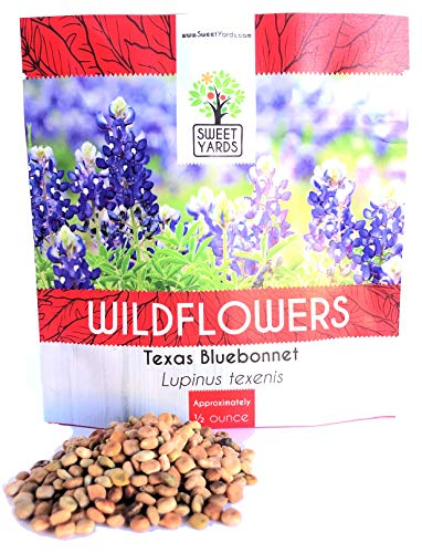 Texas Bluebonnet Wildflower Seeds - Bulk 1/2 Ounce Packet - Over 500 Native Seeds - Texas State Flower!