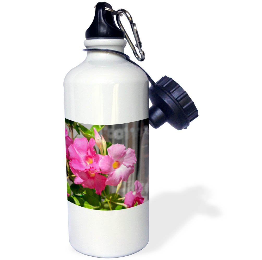 3dRose Danita Delimont - Flowers - Pink Mandevilla vine blooming, Alberobello, Italy, Europe - 21 oz Sports Water Bottle (wb_277612_1)
