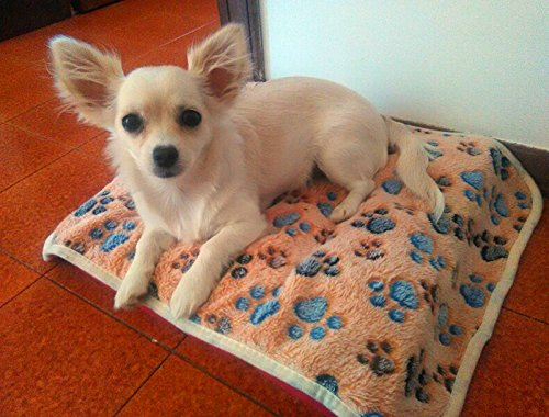 Cdet Alfombra manta para mascotas otoño e invierno manta cálida terciopelo de coral grueso,Blanco,60*40cm: Amazon.es: Productos para mascotas