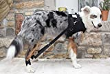 Flexipander Harness for Dogs with Degenerative Diseases of the Hind Legs and Hip (M)