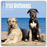 Irish Wolfhounds 2018 12 x 12 Inch Monthly Square Wall Calendar, Animals Irish Dog Breeds (Multilingual Edition)