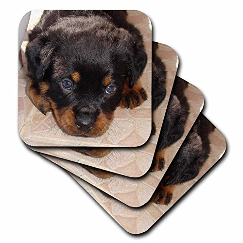 - 3dRose Dog Rottweiler Puppy - Ceramic Tile Coasters, set of 4 (cst_17676_3)