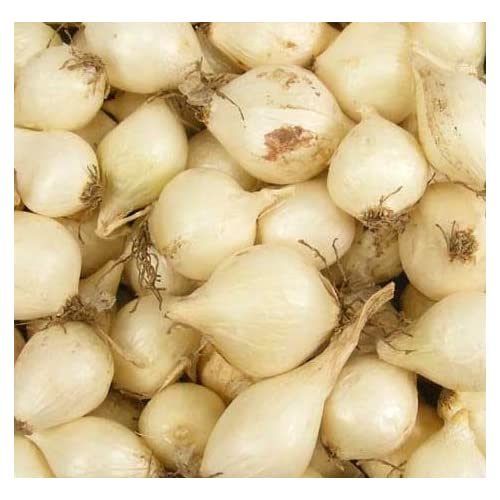 (10) Sweet White Ebanezer Onion Sets for Growing Your Own Onions for Great Tasting Vegetables