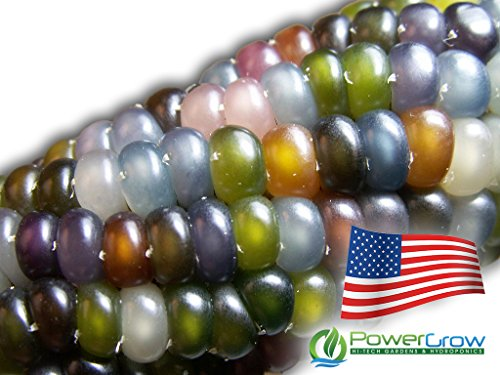 Glass Gem Corn - Rare Heirloom Variety (100+ Seeds) by PowerGrow (USA Grown) ()