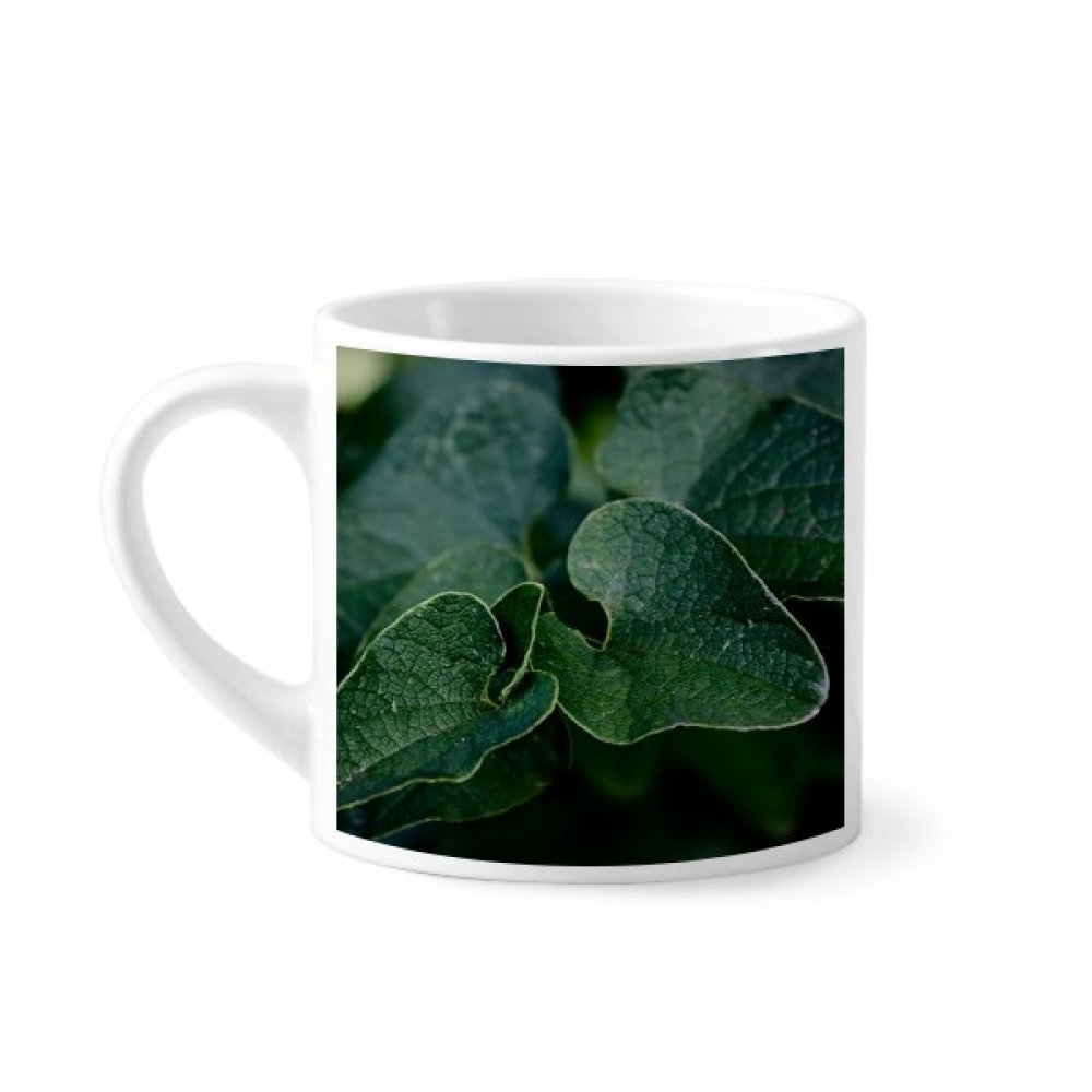 Diythinker Dark Leaf Plant Picture Nature Mini Coffee Mug White Pottery Ceramic Cup With Handle 6oz Gift Amazon In Home Kitchen