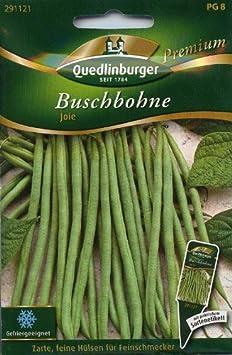 """Quedlinburger Premium Saatgut Buschbohne /""""Sonesta/"""" gefriergeeignet"""