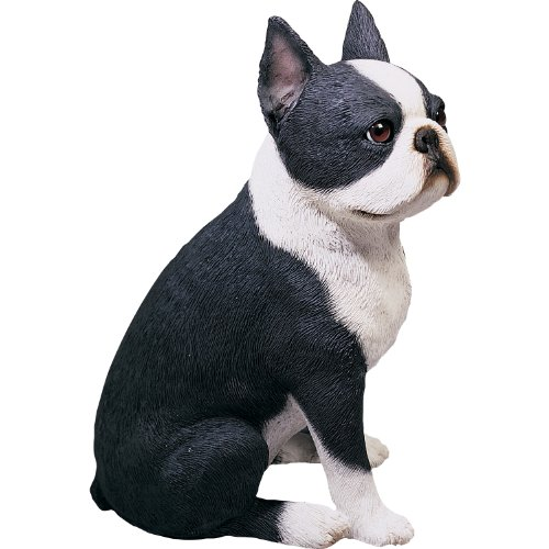 Sandicast Original Size Boston Terrier Sculpture, Sitting