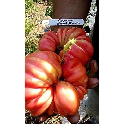 10 seeds of Mushroom Basket Tomato Seeds - Big, beautiful, unique tomatoes : Garden & Outdoor