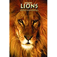 Lions (Safari Kids)