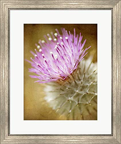 - Thistle Bloom by Jessica Rogers Photography Framed Art Print Wall Picture, Silver Scoop Frame, 22 x 26 inches
