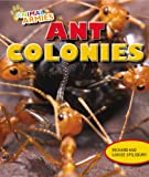 Ant Colonies, Richard Spilsbury and Louise Spilsbury, 1477703020