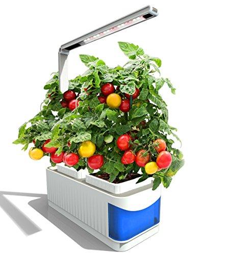 Zimmergewächshaus, Pathonor intelligentes Aufzuchtsystem für Pflanzen, Obst und Gemüse mit Beleuchtung und dem Gourmet-Kräuter Samenkit für Haus und Büro Indoor-Bepflanzung