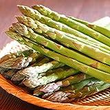 アスパラガス 北海道富良野産 【生】で食べられる グリーンアスパラガス Lサイズ以上!1kg