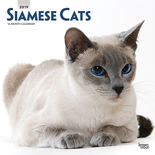 Siamese Cats 2019 12 x 12 Inch Monthly Square Wall Calendar, Animals Cats (English, French and Spanish Edition) ()