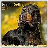 Gordon Setter Calendar 2017 - Dog Breed Calendars - 2016 - 2017 wall calendars - 16 Month by Avonside