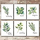 Kitchen Herbs Art Prints - Botanical Prints - (Set of 6) - Unframed - 8x10s