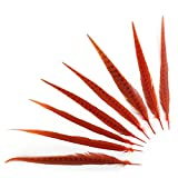 ZUCKER Assorted Pheasant Tail Feathers Dyed - 14 - 18'' - Orange