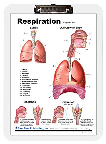 Respiration Lab (Respiration and Lungs Insert Clipboard)