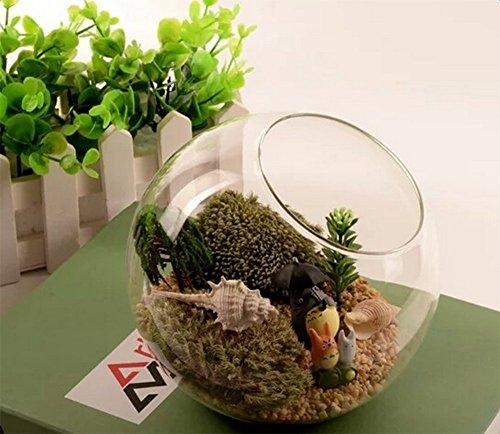 Cratone Vases Hanging Planter Glass Air Plant Terrarium Kit Home Decorations for Succulent Tealight by Cratone (Image #5)