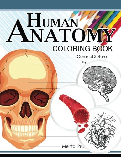 Ebook Human Anatomy Coloring Book Anatomy Physiology