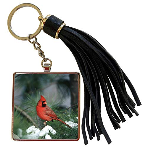 3dRose Danita Delimont - Cardinal - Northern Cardinal male in Pine tree in winter, Marion, Illinois - Tassel Key Chain (tkc_250897_1)