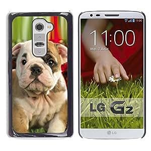 TopCaseStore / la caja del caucho duro de la cubierta de protección de la piel - Boston American Pit Bull Terrier Bulldog - LG G2 D800 D802 D802TA D803 VS980 LS980