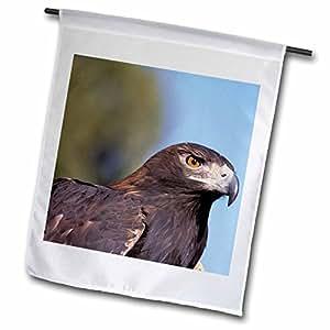 Danita Delimont - Eagles - New Mexico, Bosque del Apache, Golden Eagle - NA02 CMI0001 - Cindy Miller Hopkins - 18 x 27 inch Garden Flag (fl_83707_2)