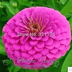 100 semillas de flores de caléndula longevidad crisantemo balcón mezclar semillas de siembra maceta de jardín Caléndula envío libre