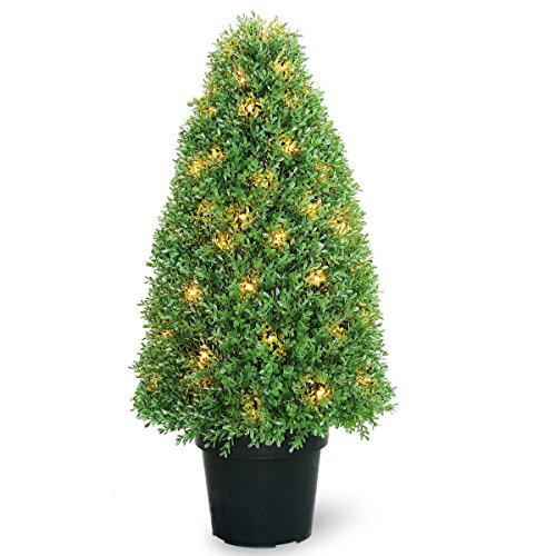 National Tree 36 Inch Boxwood Tree with 70 Clear Lights in Dark Green Growers Pot (LBX4-300-36) by National Tree Company