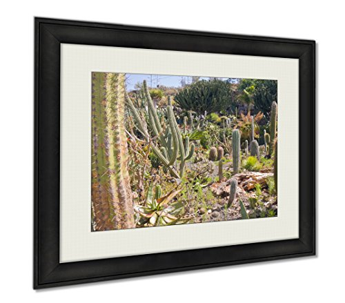 Ashley Framed Prints Cactus Garden At La Palma Spain, Wall Art Home Decoration, Color, 34x40 (frame size), AG6391933 by Ashley Framed Prints